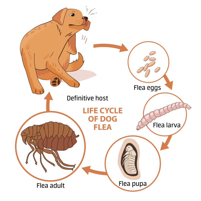 How To Get Rid Of Fleas On Dogs Fast By Samuel Eleyinte Medium