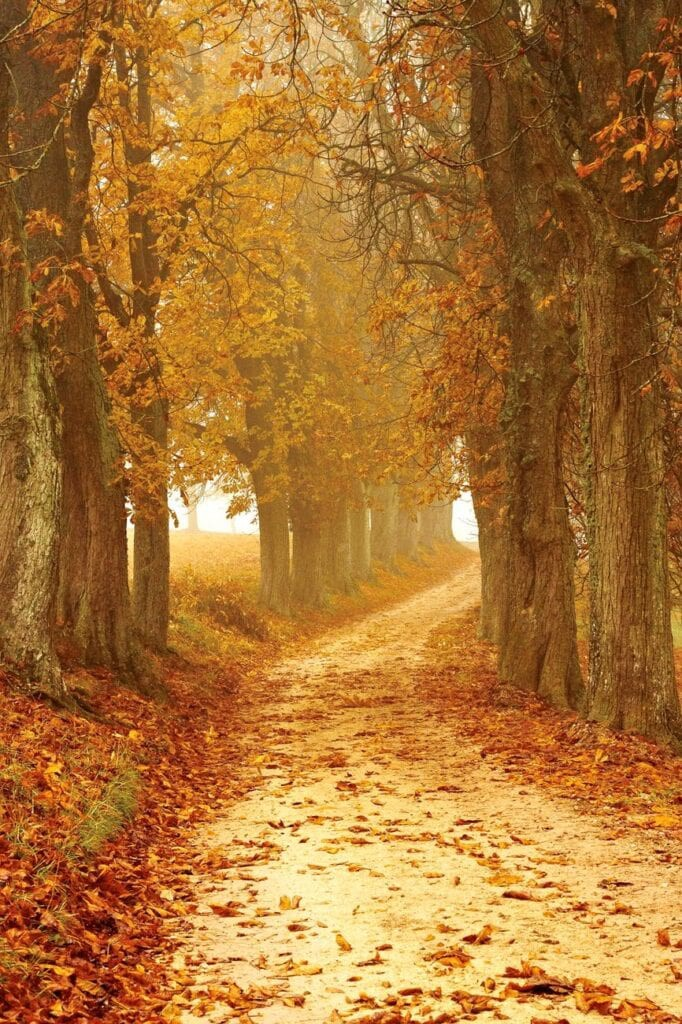 Autumn is a journey to take within yourself and to share with others. Photo by Pixabay from Pexels