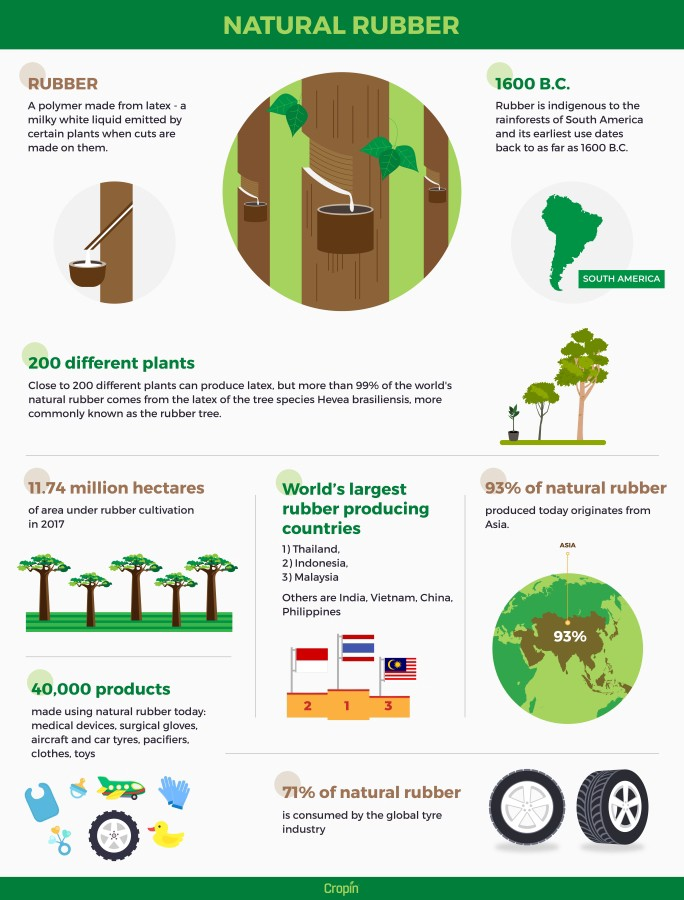 Infographic on Natural Rubber