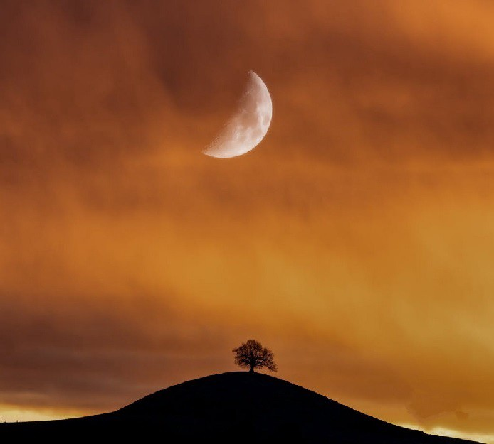 A lone tree on a hill with the moon in the background.