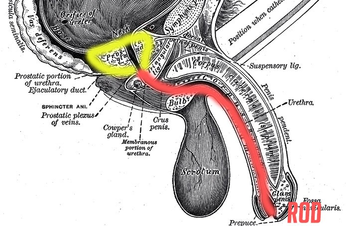 Sounding 101: Your Guide To Urethral Sounding & Best