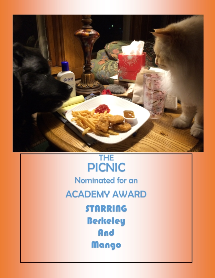 The Picnic starring Berkley the dog and Mango the cat, Landseer Newfoundland and Flame Point Ragdoll. They bow to applause.