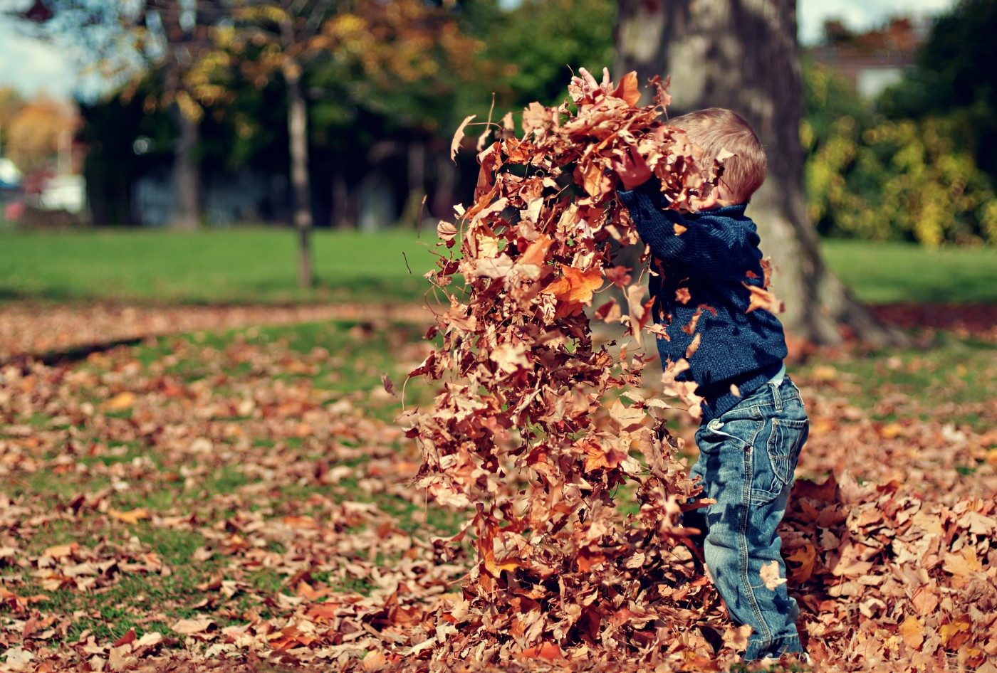 Little boy playing in a pile of leaves