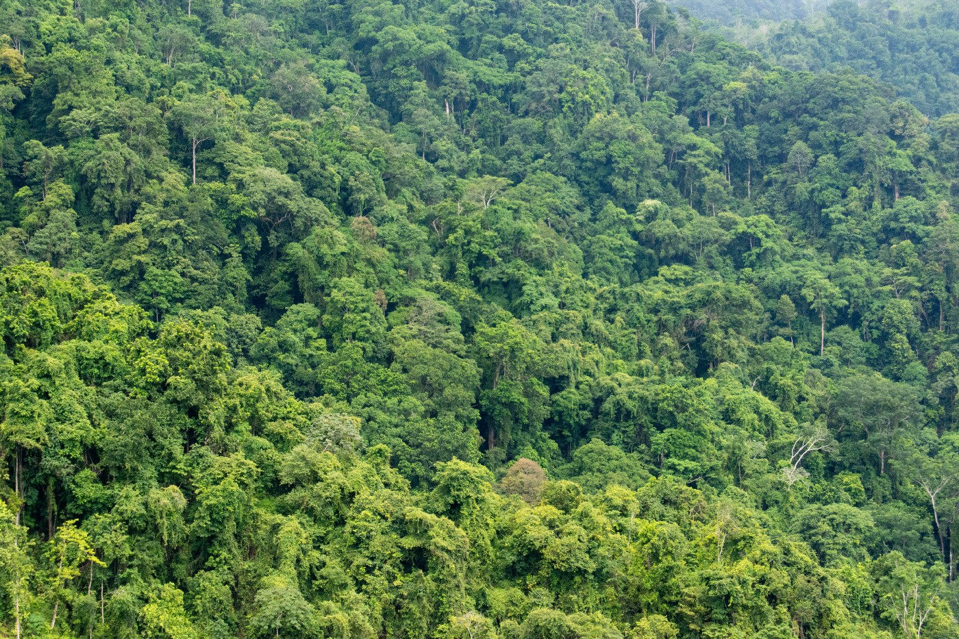 Panorama shot of a rainforest, filled with green trees.