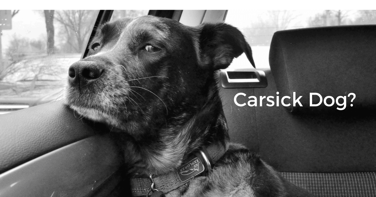5 Tips To Quickly Help Your Dog With Car Sickness