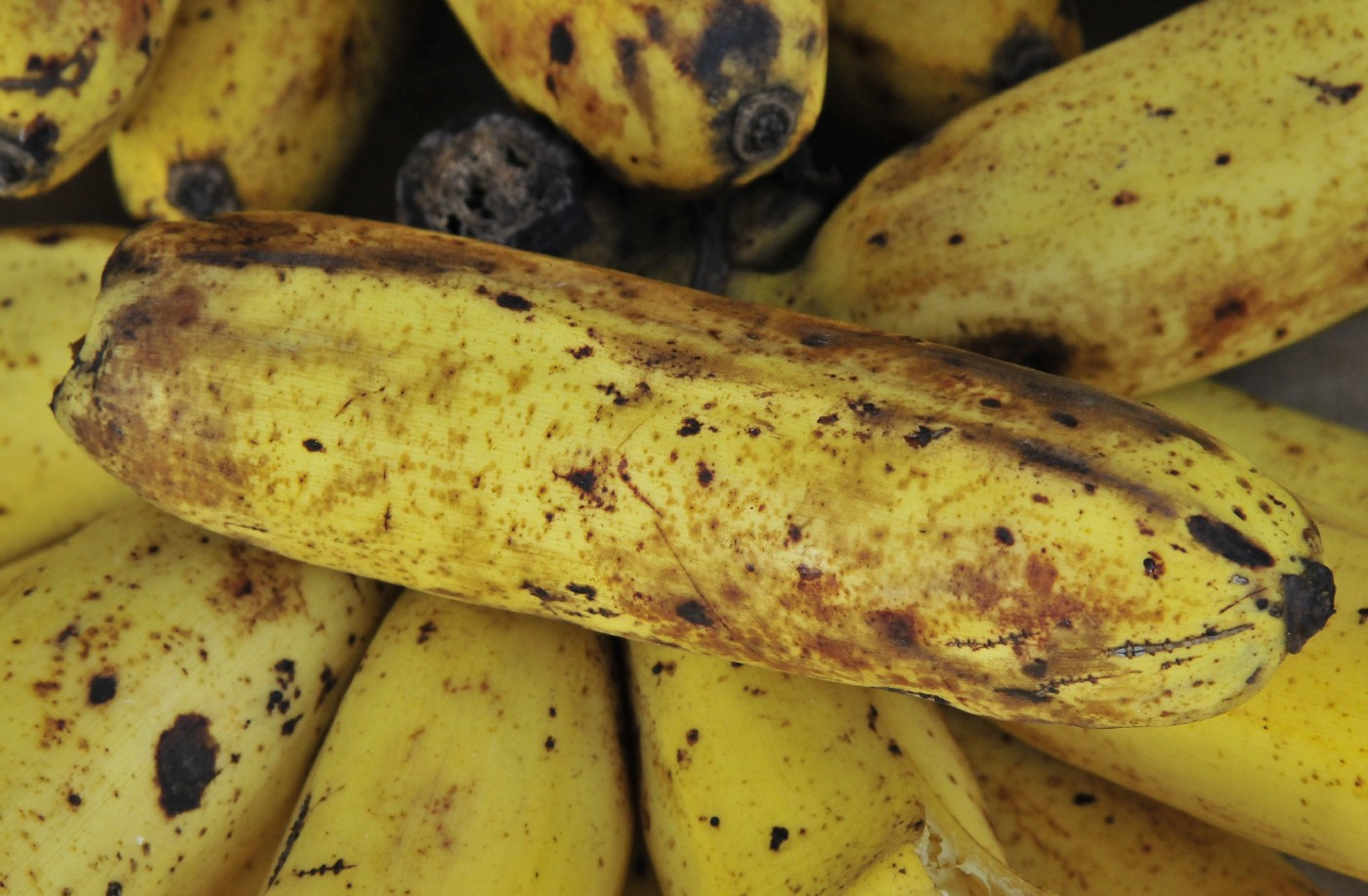 Close-up of a pile of blemished yellow bananas