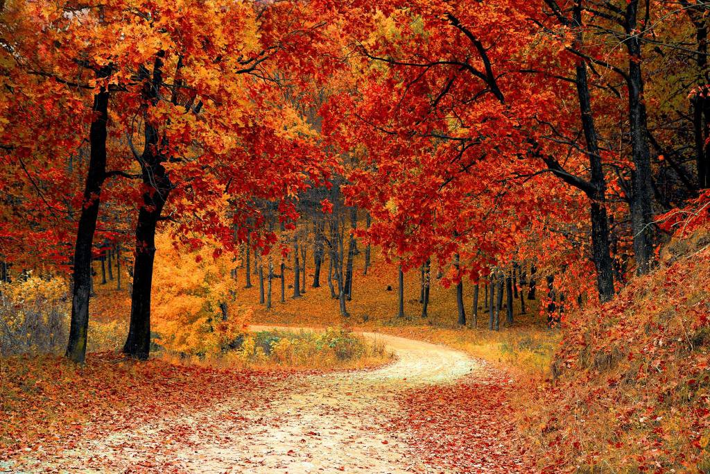 A path through trees in the fall