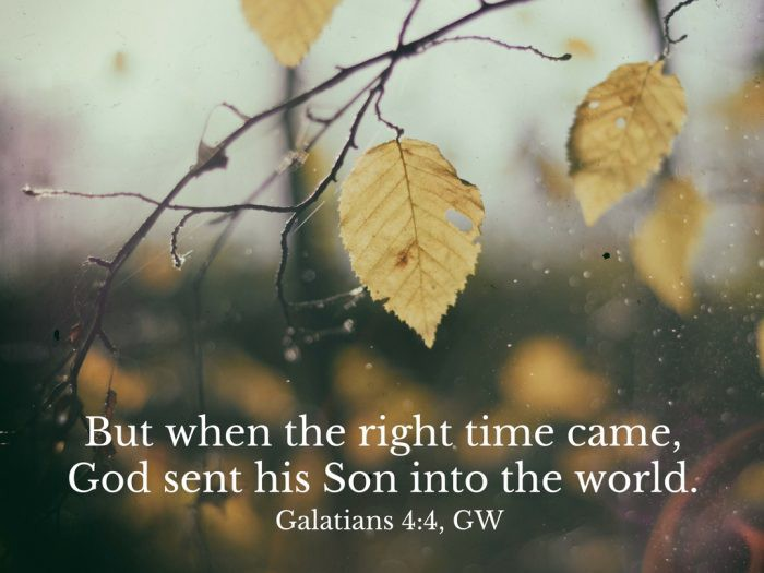 Galatians 4:4, rainy autumn day with sparse leaves on a tree