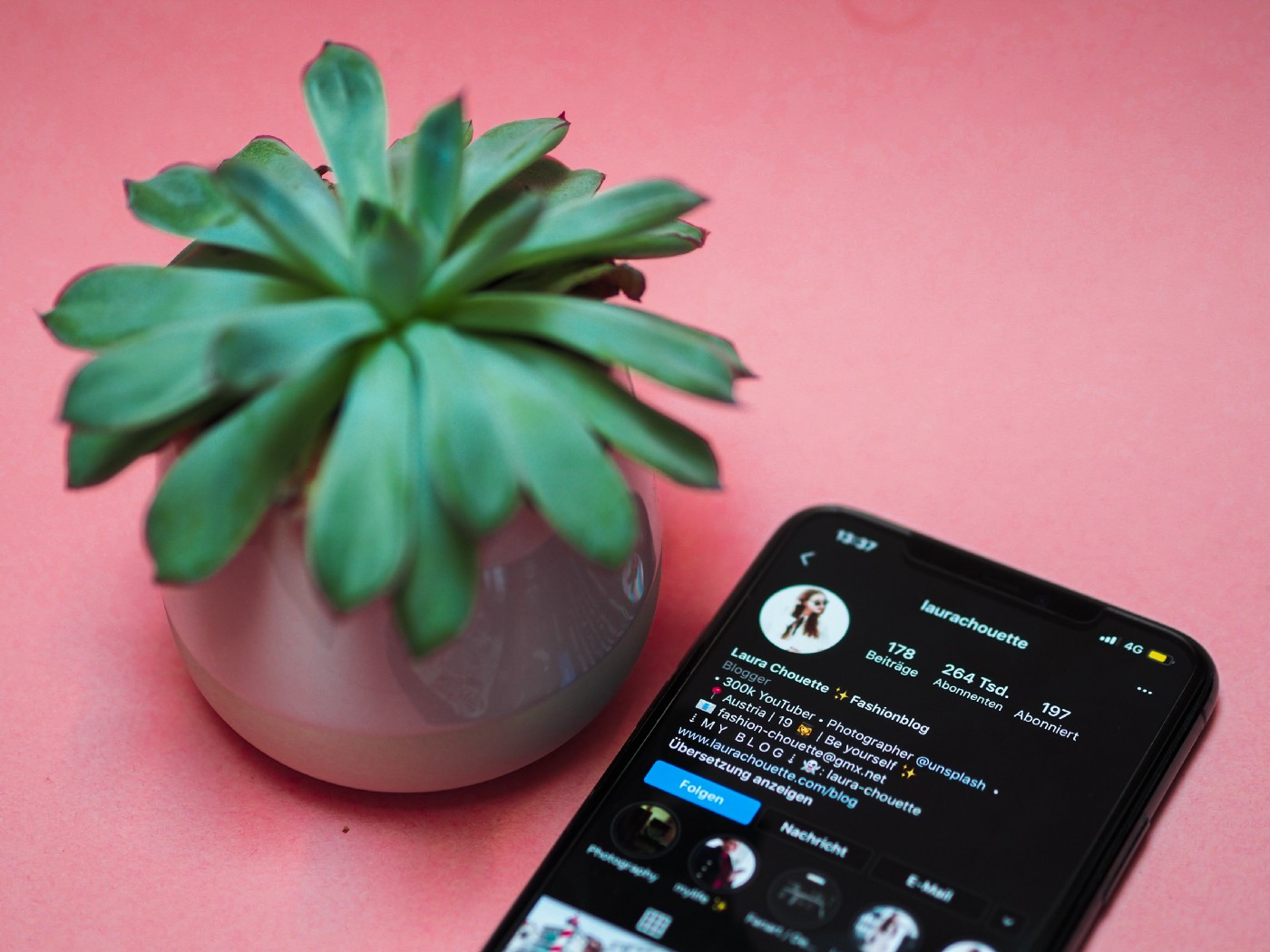 A succulent with smartphone showing Instagram profile