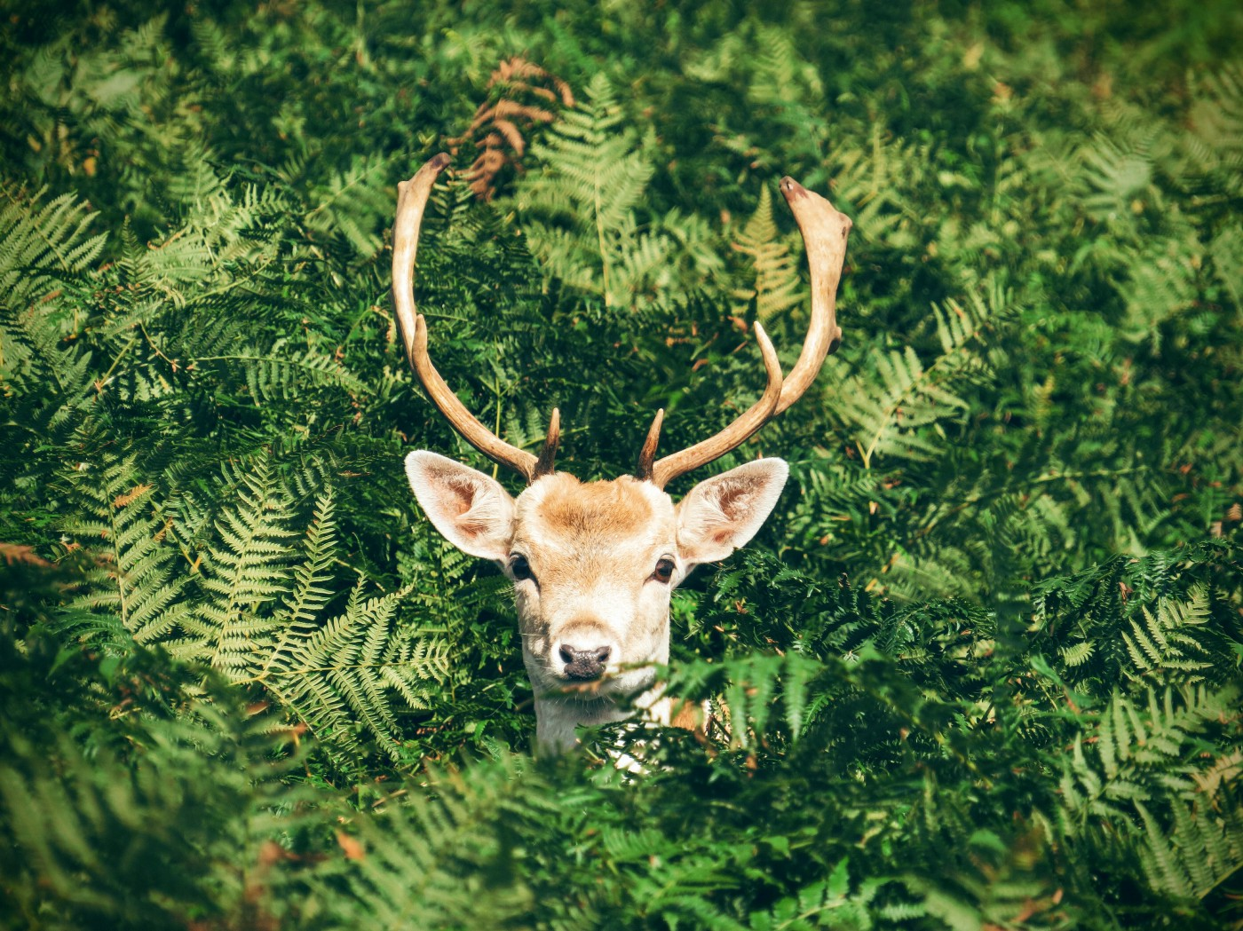 Deer eats plants and love anything you grow in your garden.
