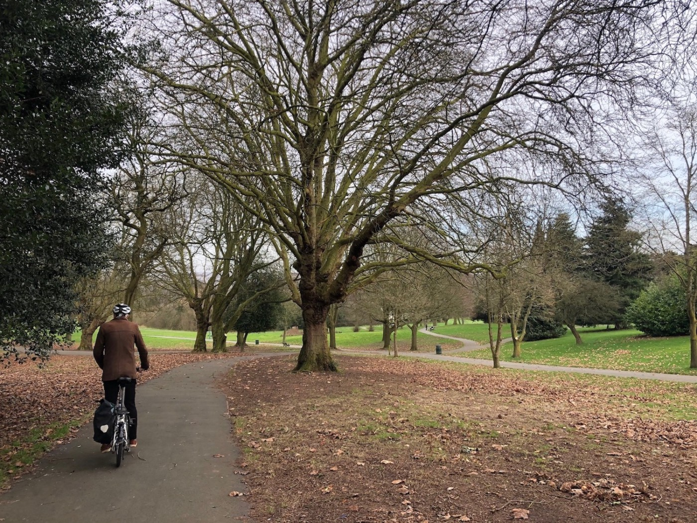 Person cycling through a park on a grey autumn day, trees are bare and leaves are on the ground