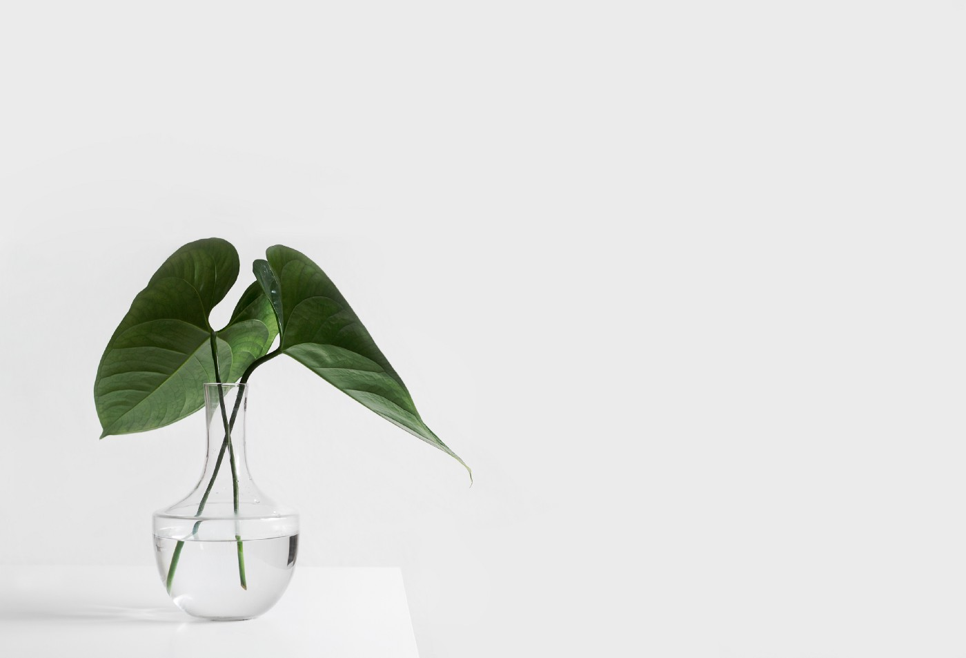 Two leaves in a vase of water