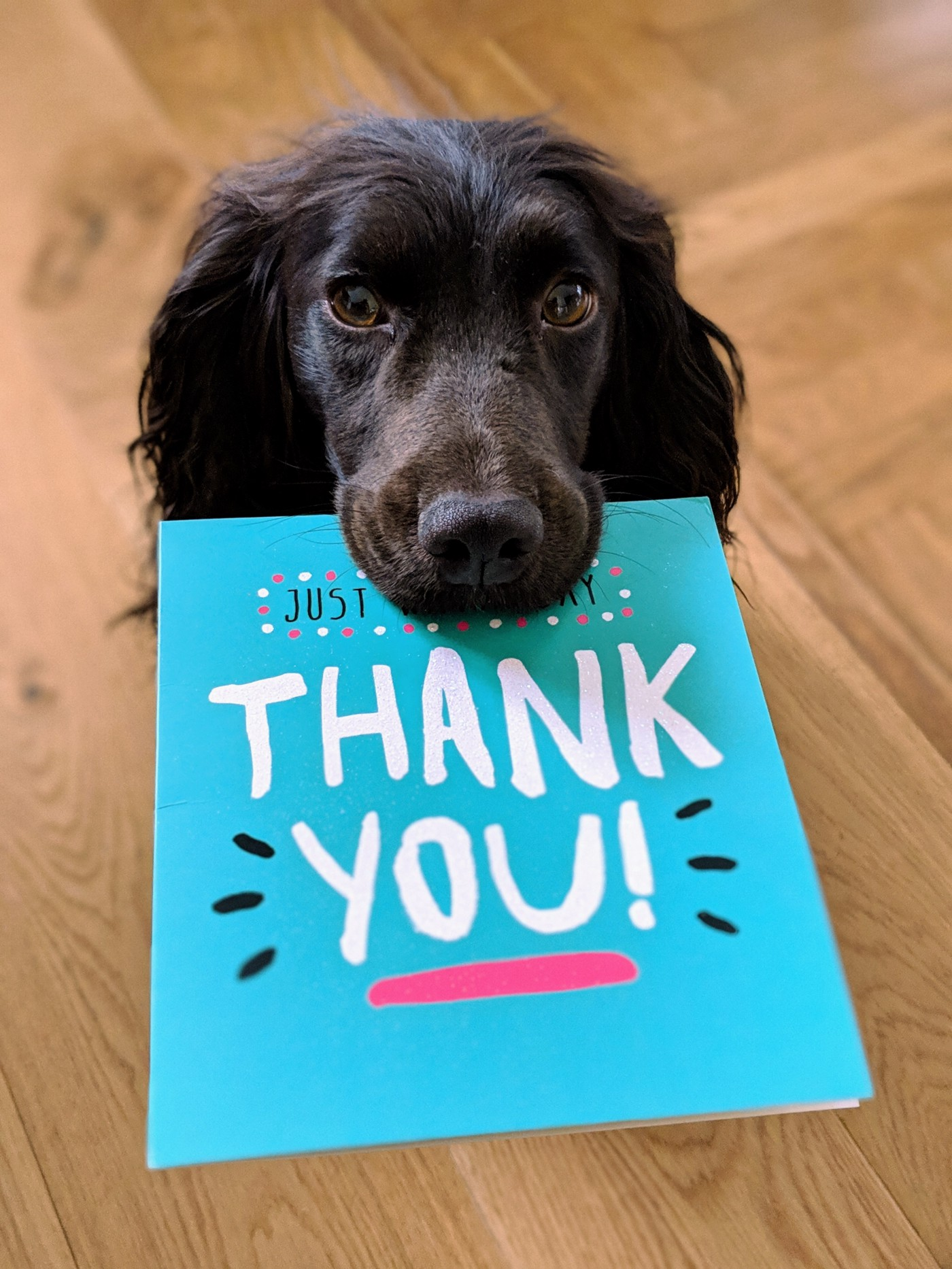 A black dog holds a thank you card