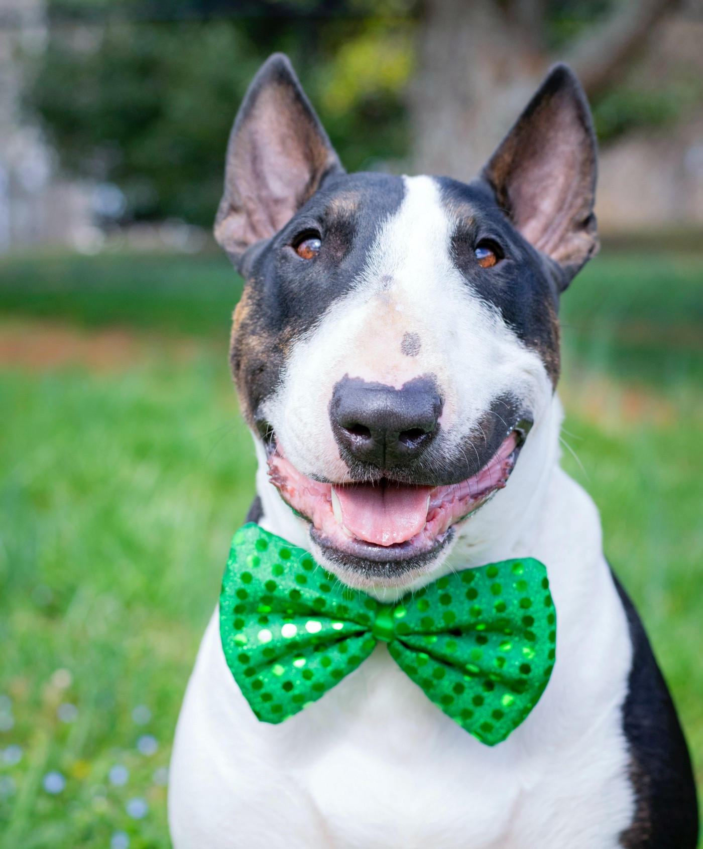 dog wearing green bowtie while smiling