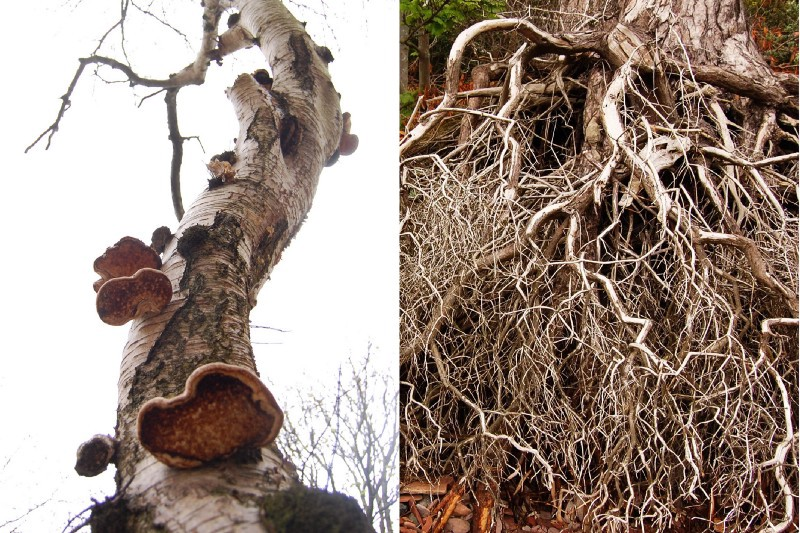 Some trees have long straight trunks, with few branches, and maybe some fungus growing; others have heavily branching structures, with many tiny tendrils.