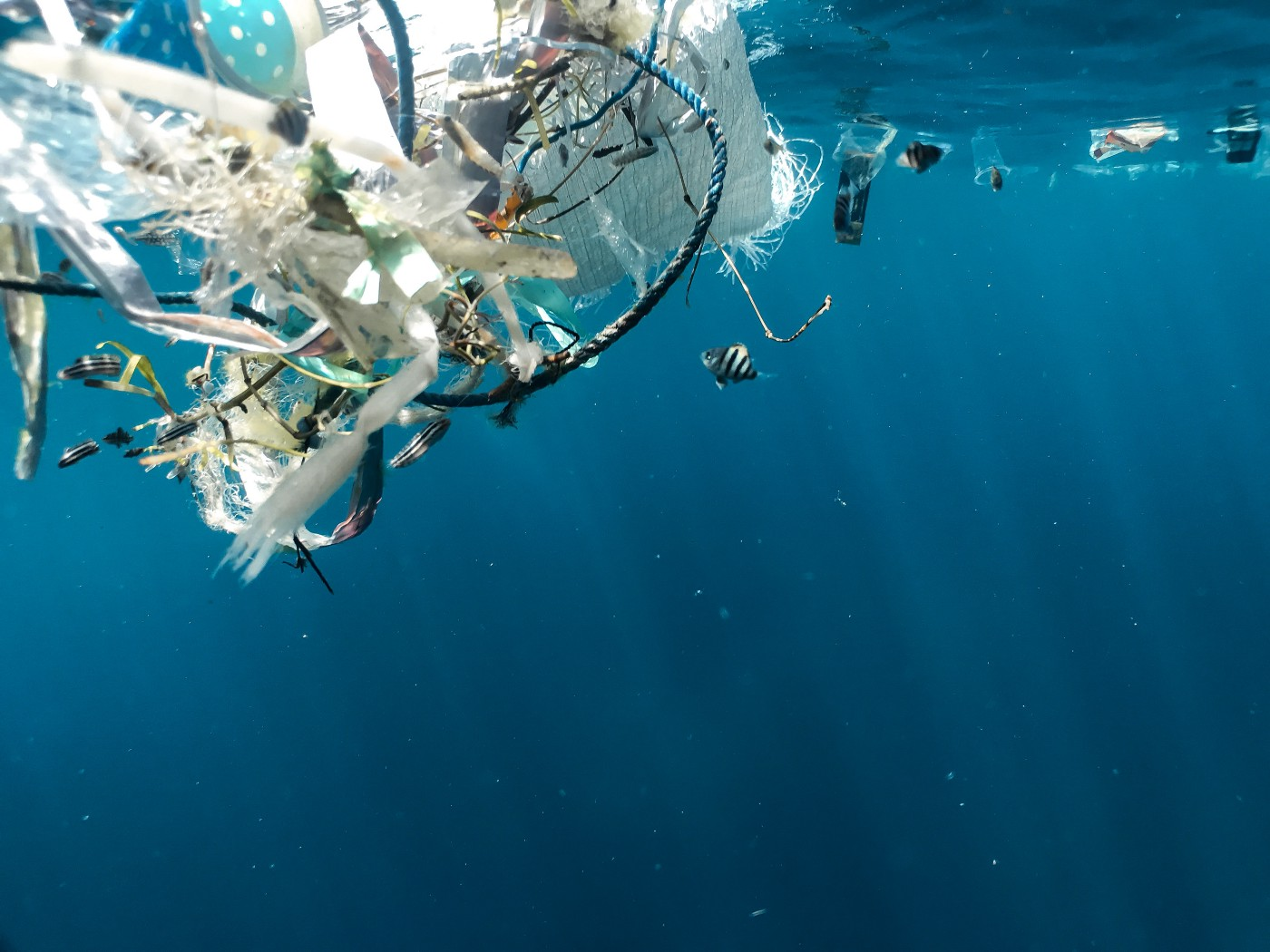 Underwater photo of a bunch of plastic waste floating.