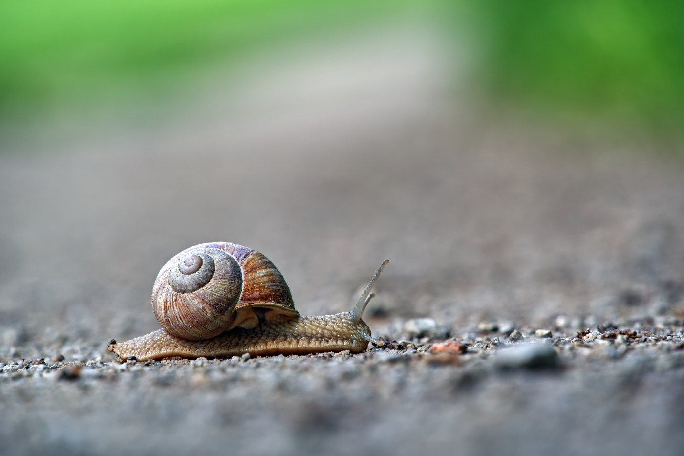 A snail on a road