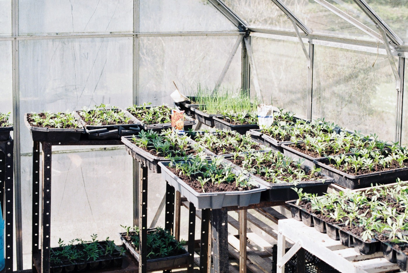 A photo of some seed-starting trays in a greenhouse.