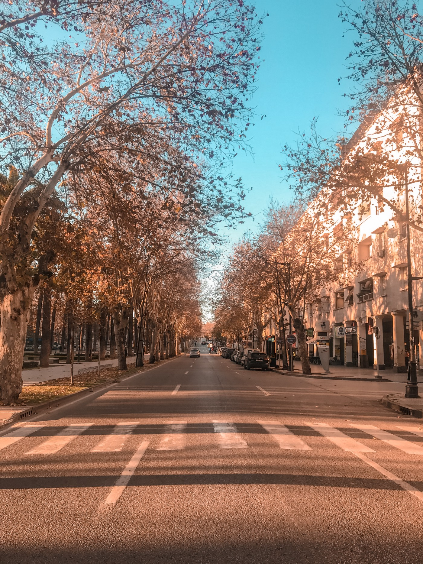 a sunny day, a street with color trees on both sides, there is a zebra crossing