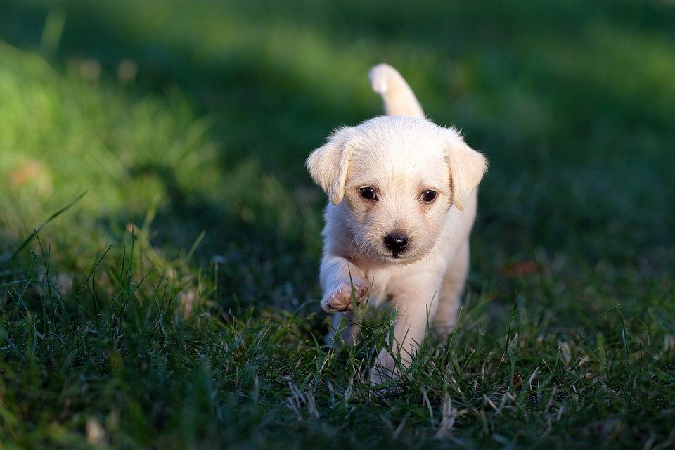 How to Stop Puppy from Peeing When Excited