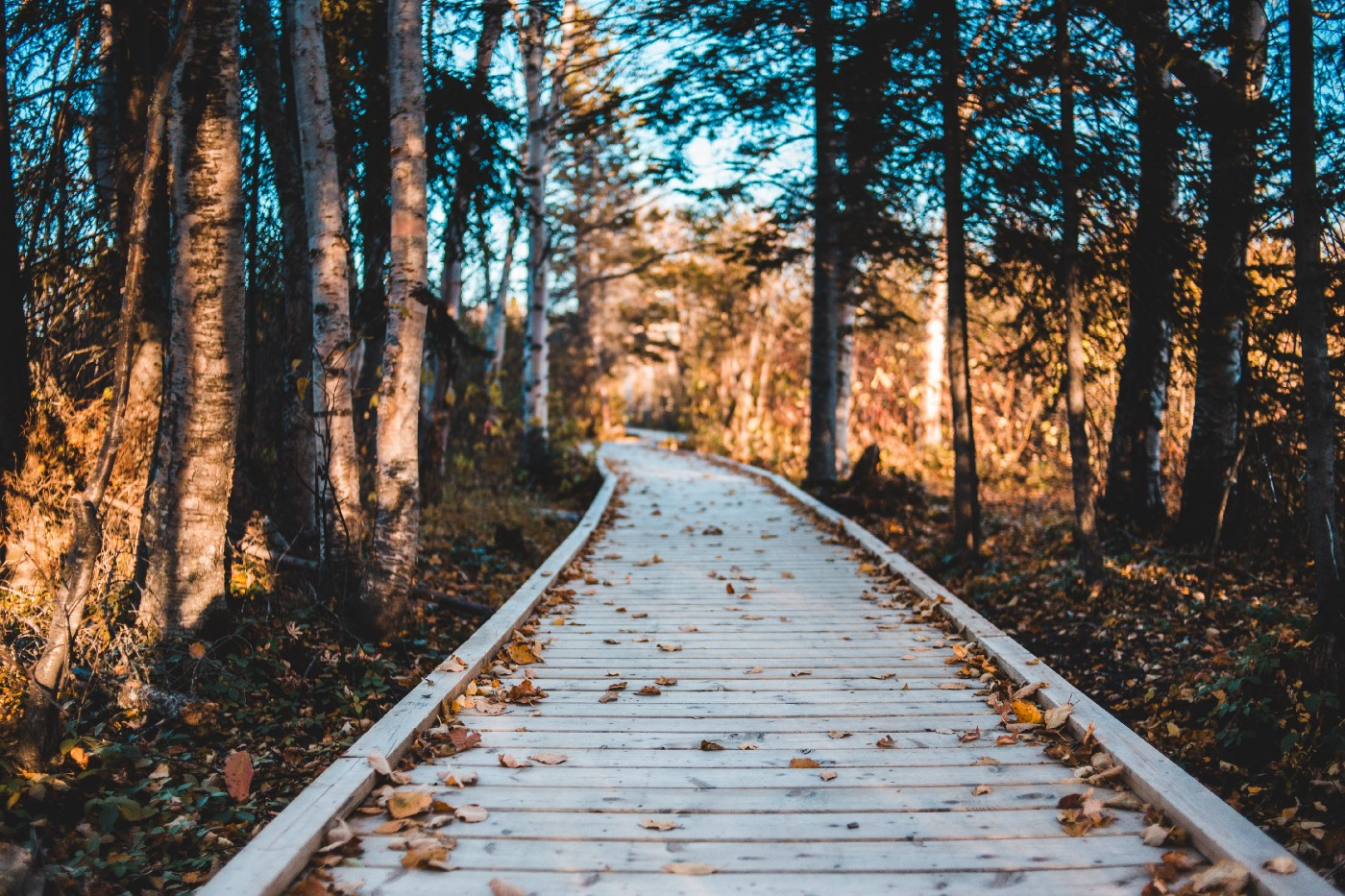A wooden pathway through the woods on a fall day.