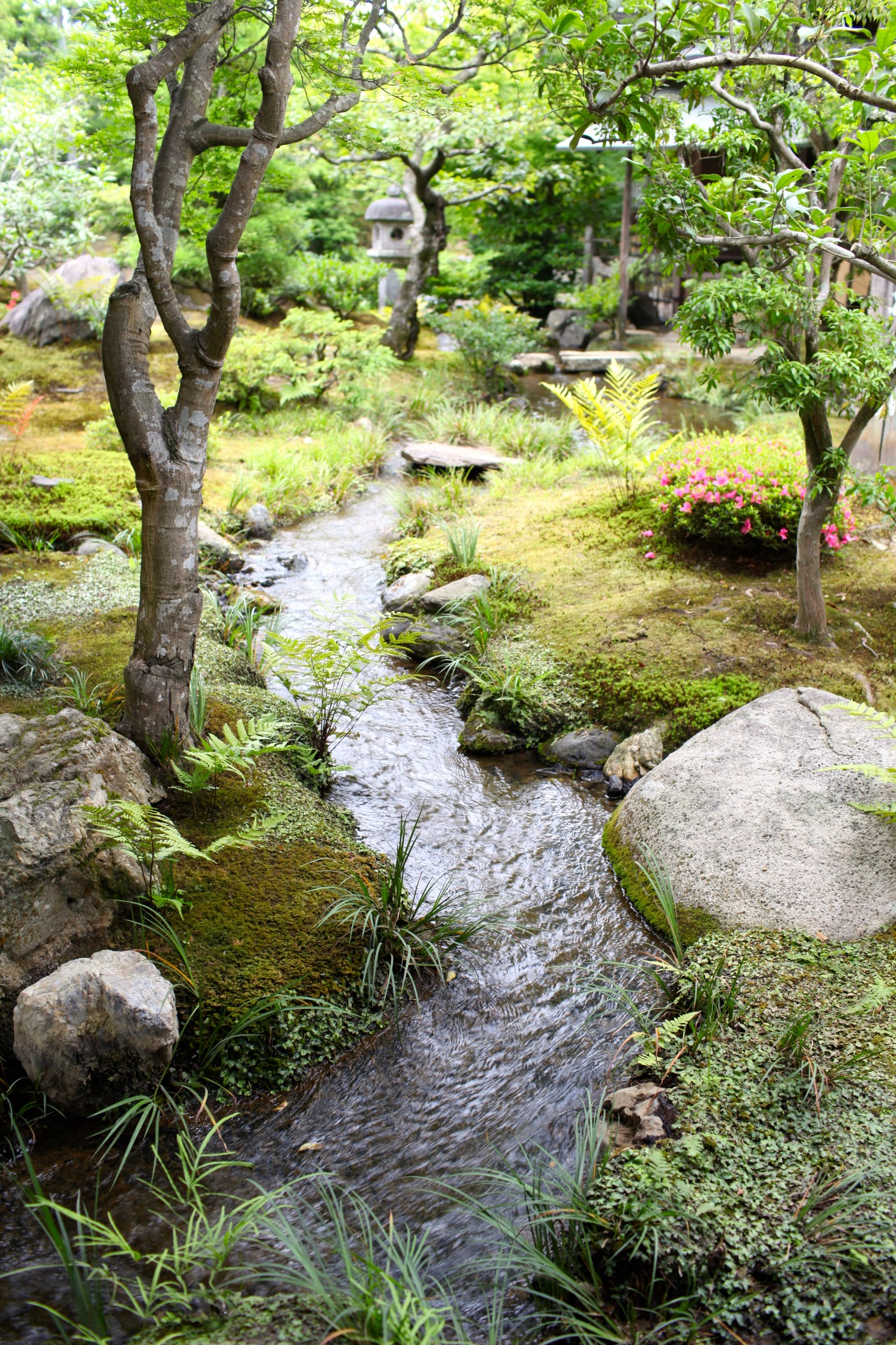 the image is that of a beautiful peaceful place in nature with a quiet stream running through it. There are trees on either side and stones and moss and ferns and flowers growing; it gives the idea of peace and tranquility.