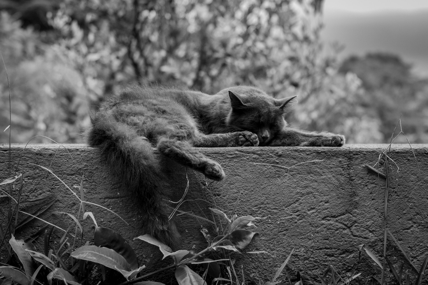 Black and white photo of a cat resting on a ledge.