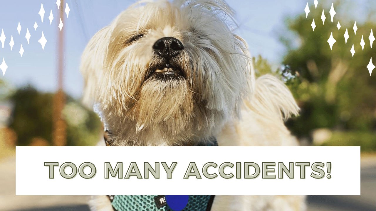 Main Causes Of Incontinence In Senior Dogs - How To Manage It.