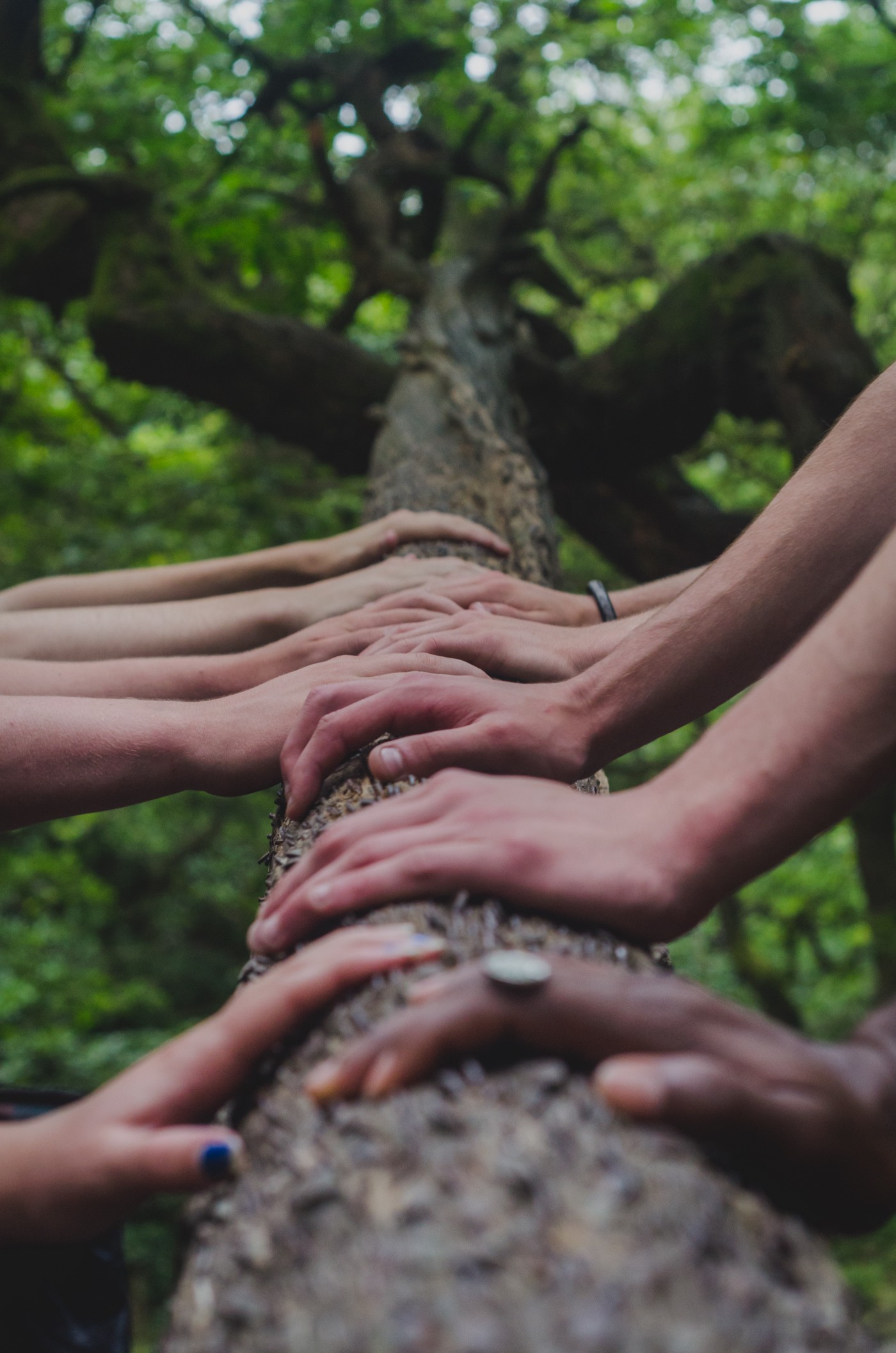 Ten hands placed alongside each other up a tree trunk