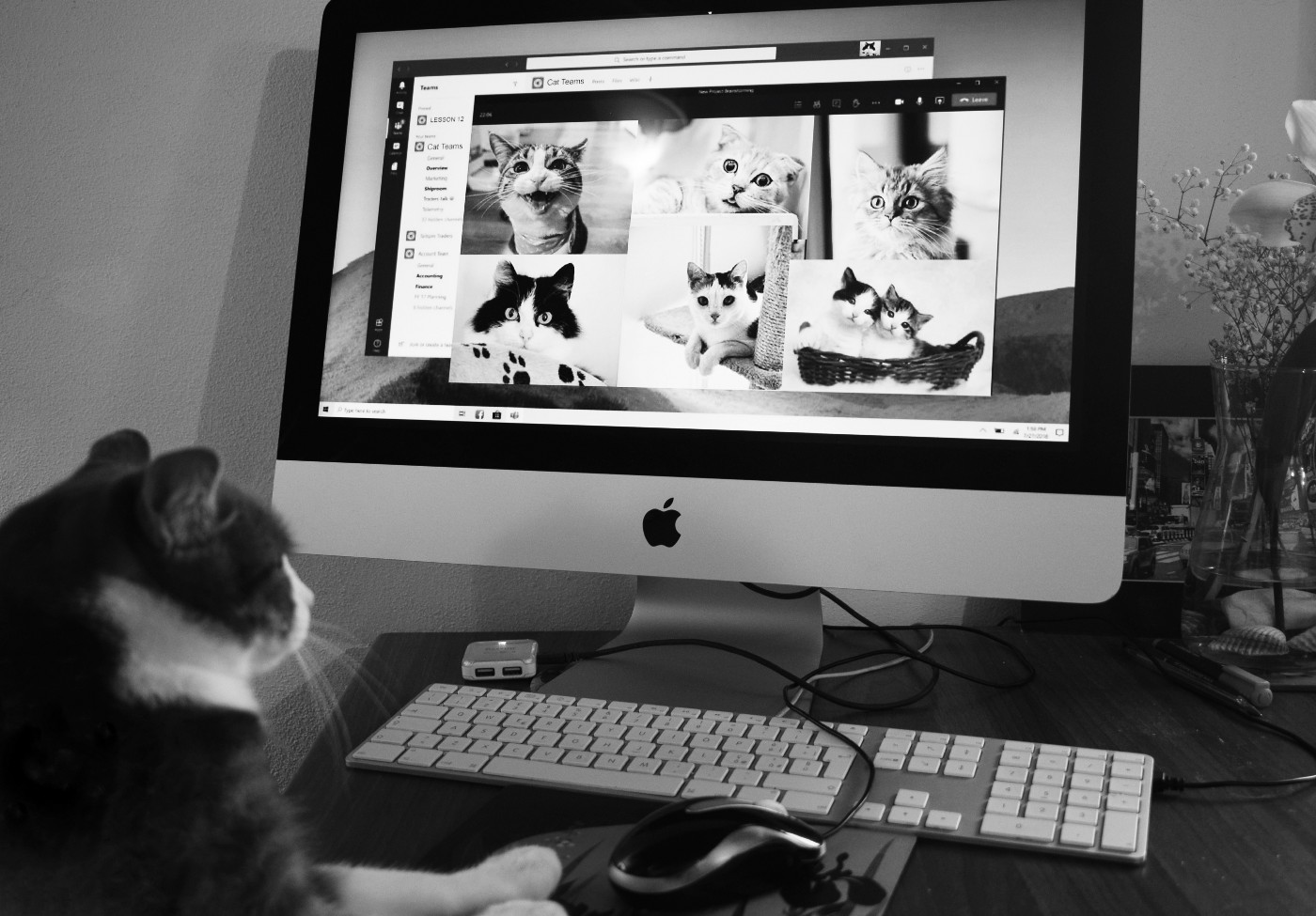 A black and white photo of a cat sitting at a computer keyboard looking at pics of cats online.