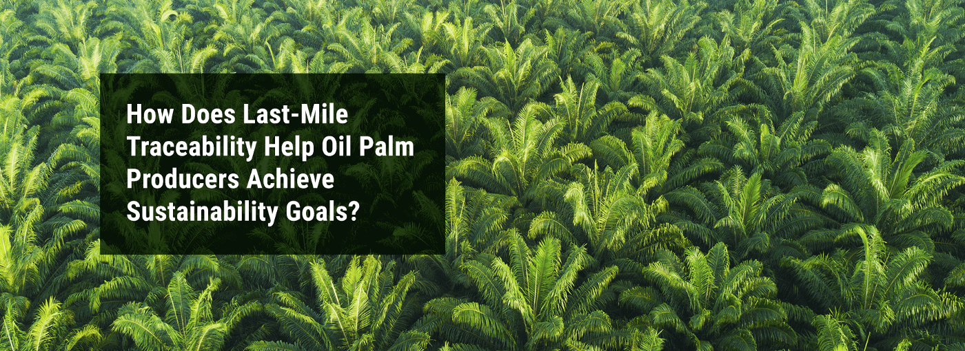 """Banner Image: """"How Does Last-Mile Traceability Help Oil Palm Producers Achieve Sustainability Goals?"""""""