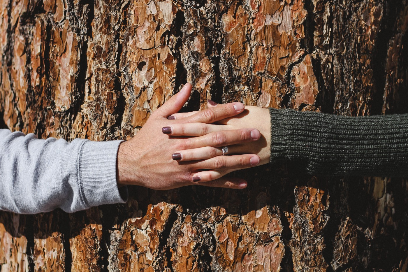A close shot of two hands intertwined (male and female) while hugging a tree.