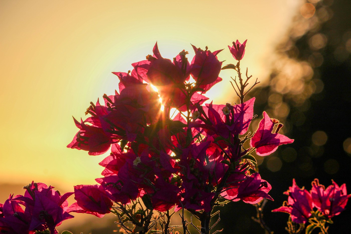 Flowers open up to gather in the morning sun.