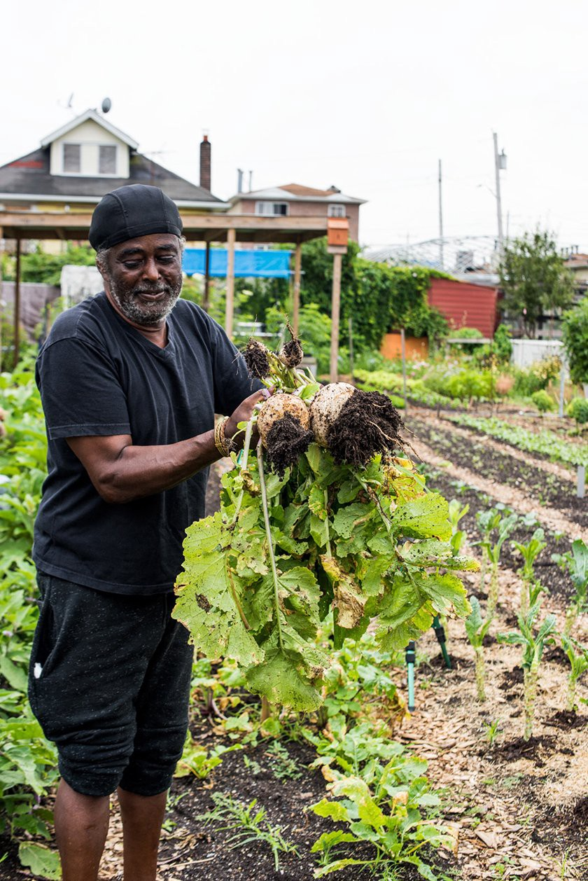 """At New York's Edgemere Farm in the Far Rockaways, one of the resident growers Lightbourne Gibson """"Lighty"""" holding harvested Purple Top Turnips. (Photo: Valery Rizzo, Urban Farmers)"""