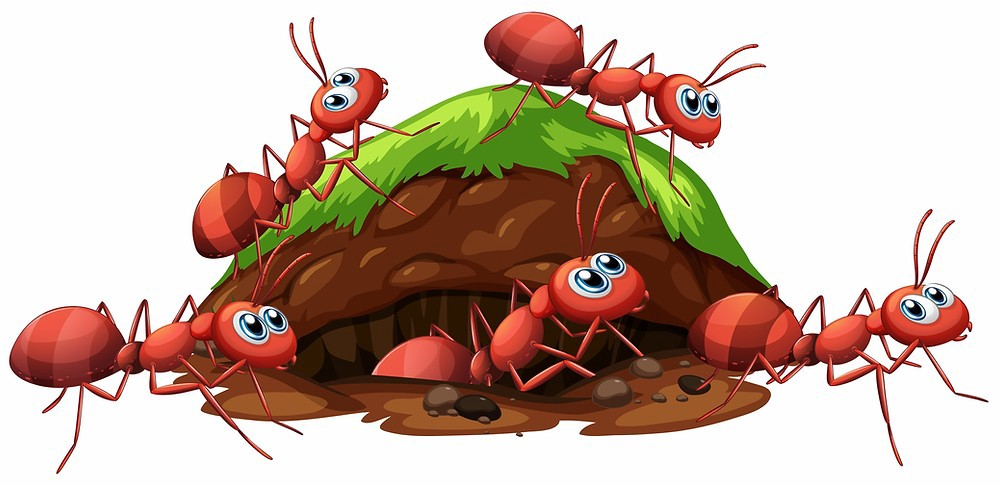 CoCreation Station, Discover your calling, Ants crawling out of a hole.
