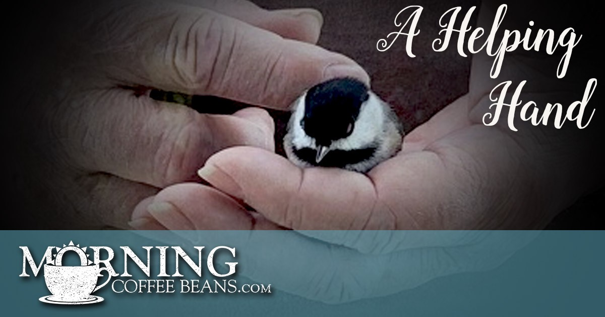 Hands holding sparrow.