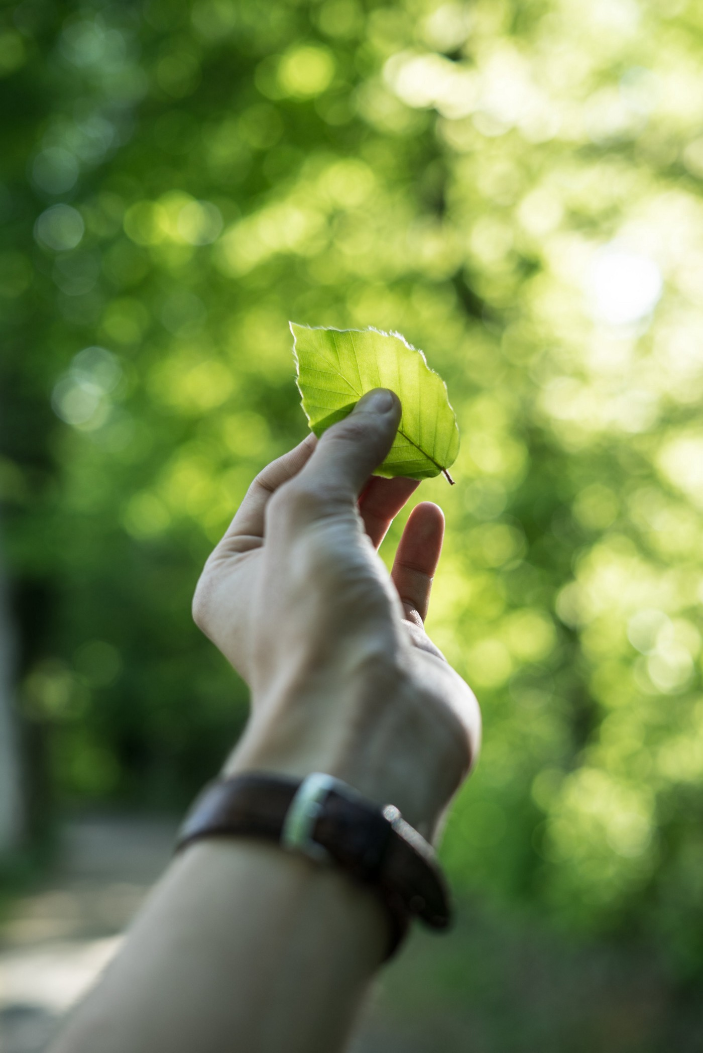 A person holding a leaf with his hand in front of a green background.
