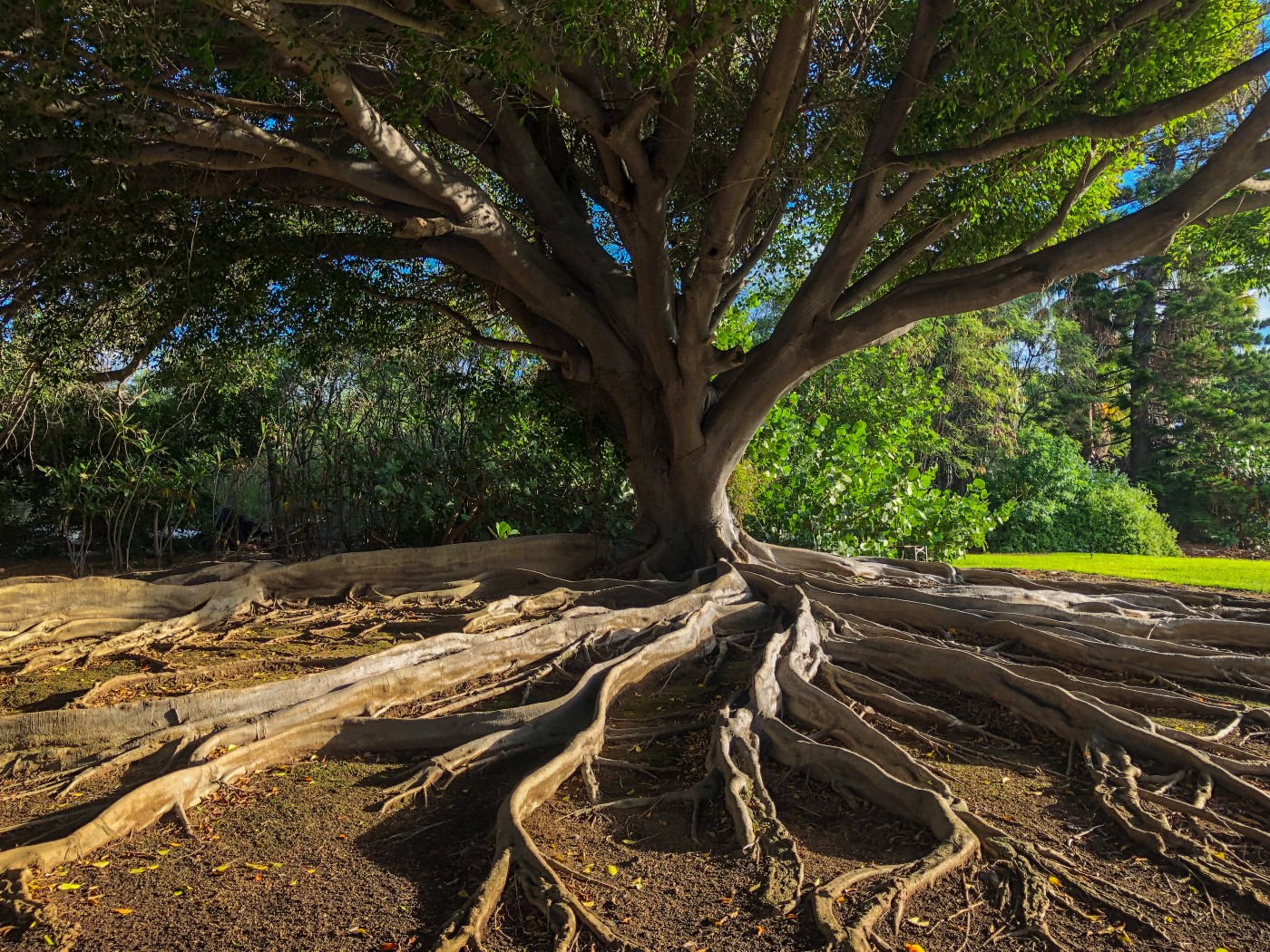 Roots. We all need to sink our roots somewhere