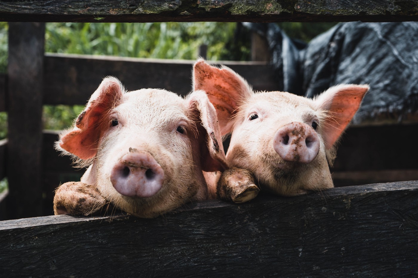 why factory farming should stop