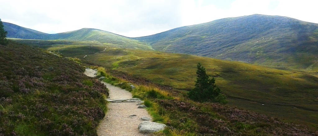 Winding path in Cairngorms, Scotland