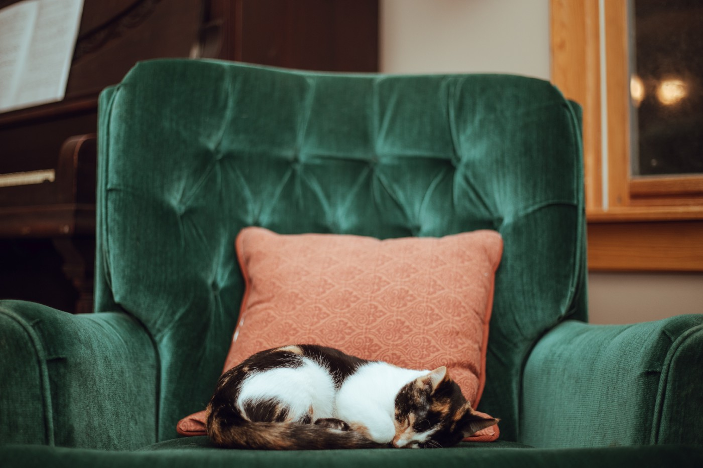 A cat, sleeping comfortably on a lounge chair.