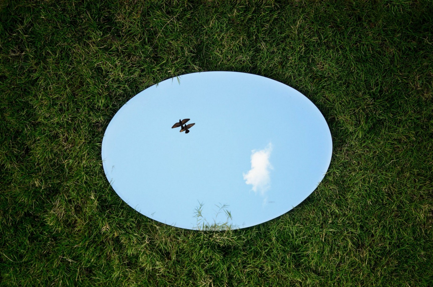 Mirror in the grass, reflecting blue sky and a pair of birds flying by