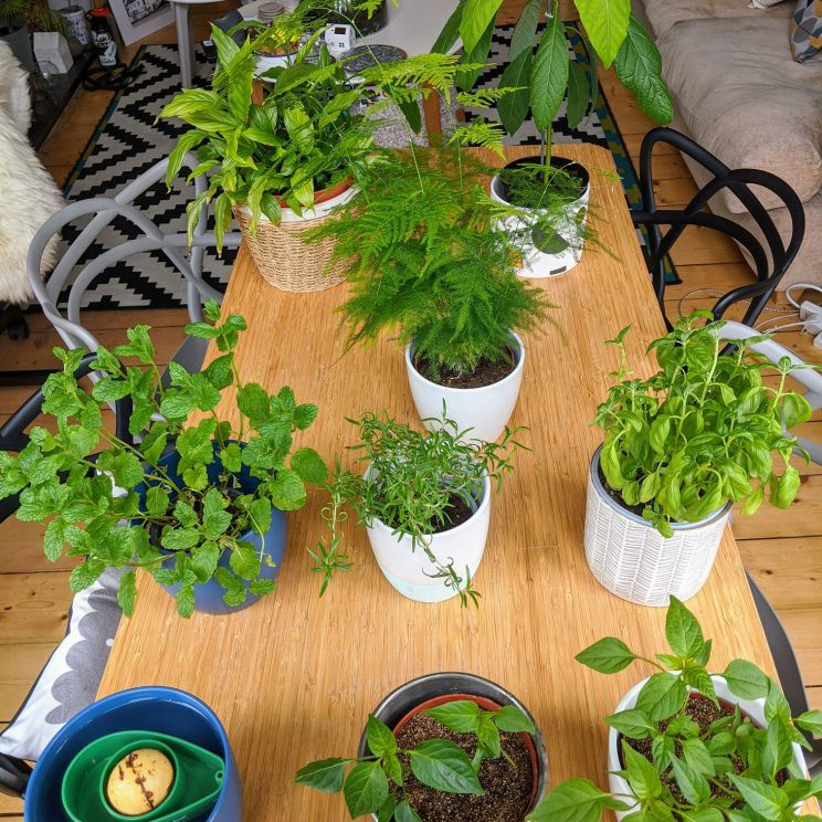 Plants on our living room table