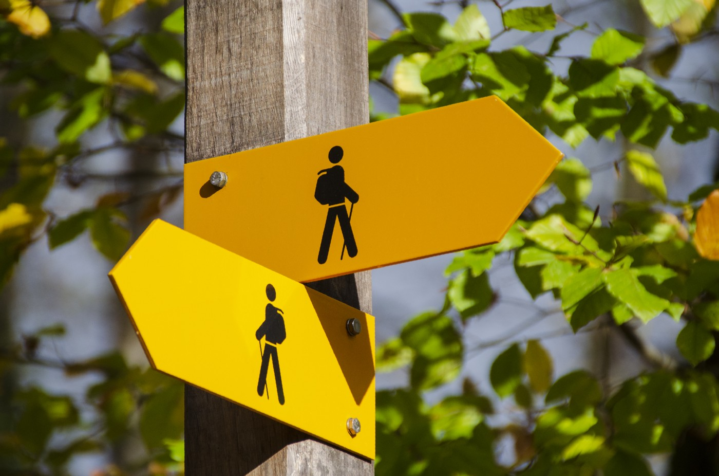 Signs showing people walking in different directions