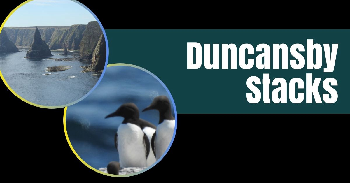 Duncasby Stacks - Fab Cliffside Walk With Stunning Views & Teeming with Birds
