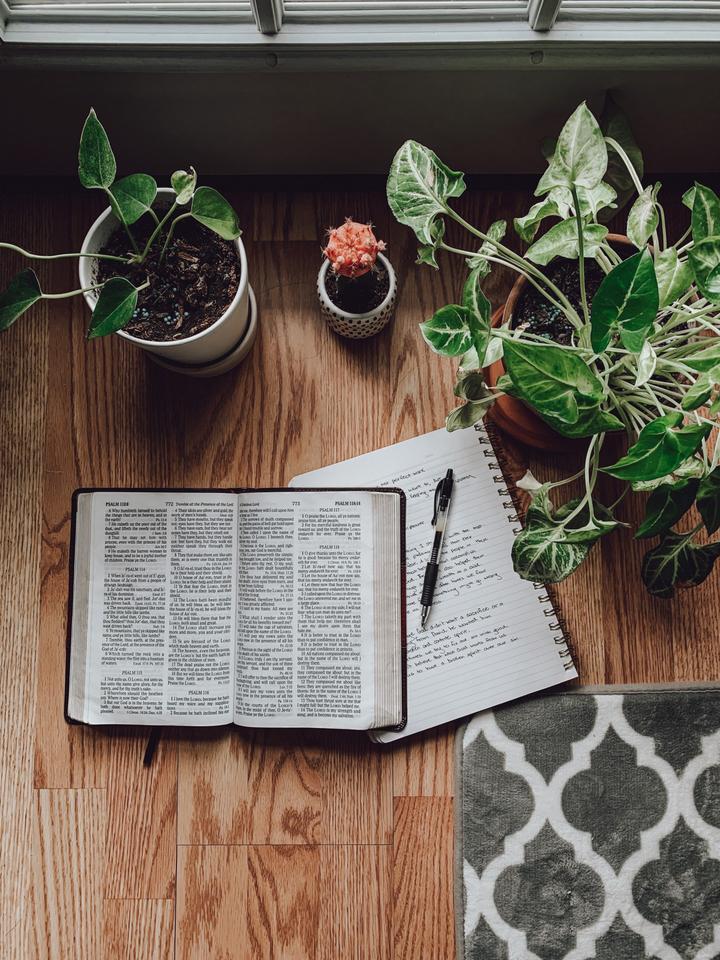 photo of bible, journal and plants by rachel strong posted on mickey markoff article about devotionals