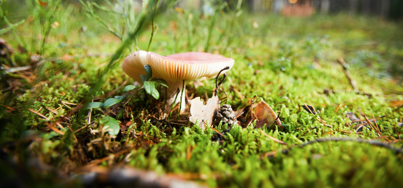 How Mushrooms Can Clean Up Oil Spills