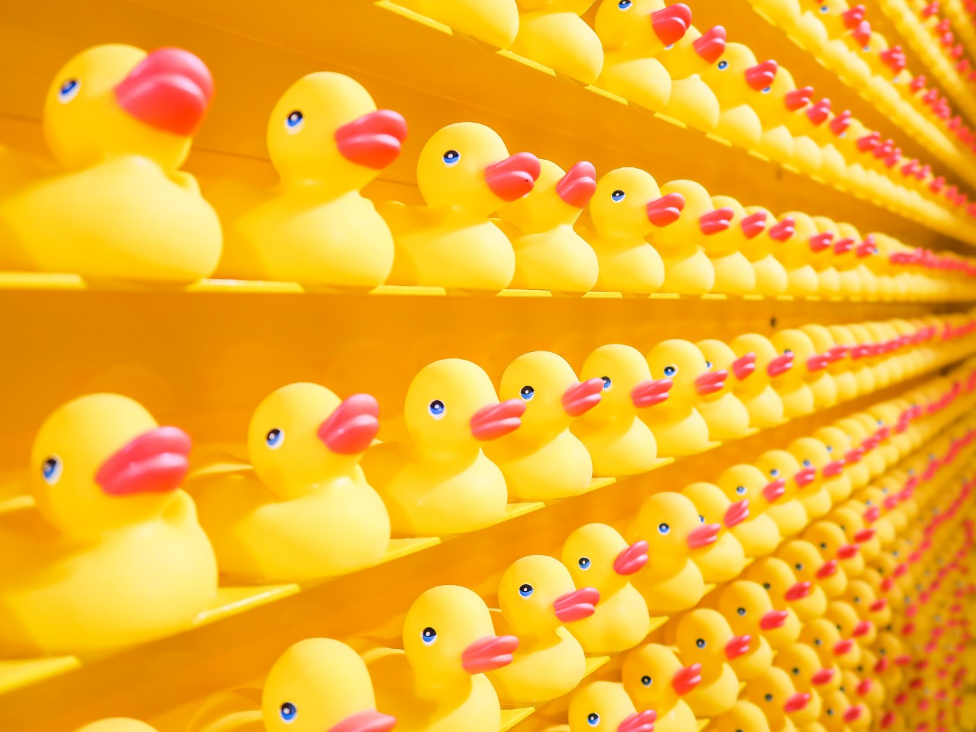 Dozens of yellow rubber ducks lined up in rows on shelves