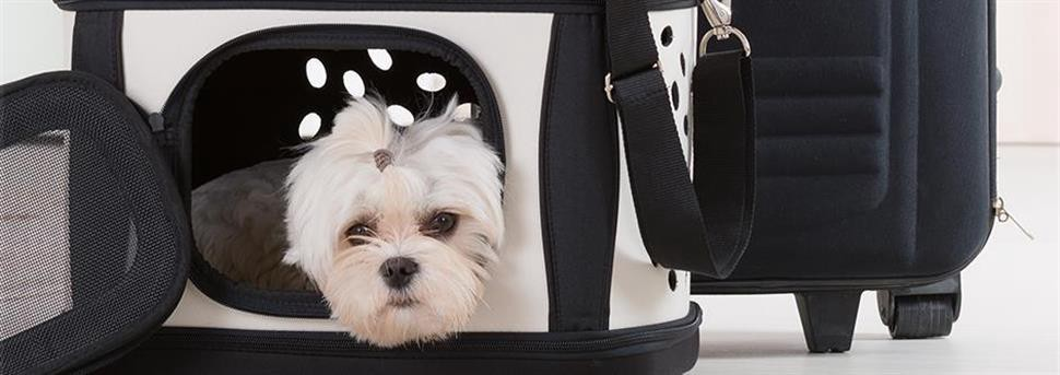 How to train a dog to crate and carry: training method and technique