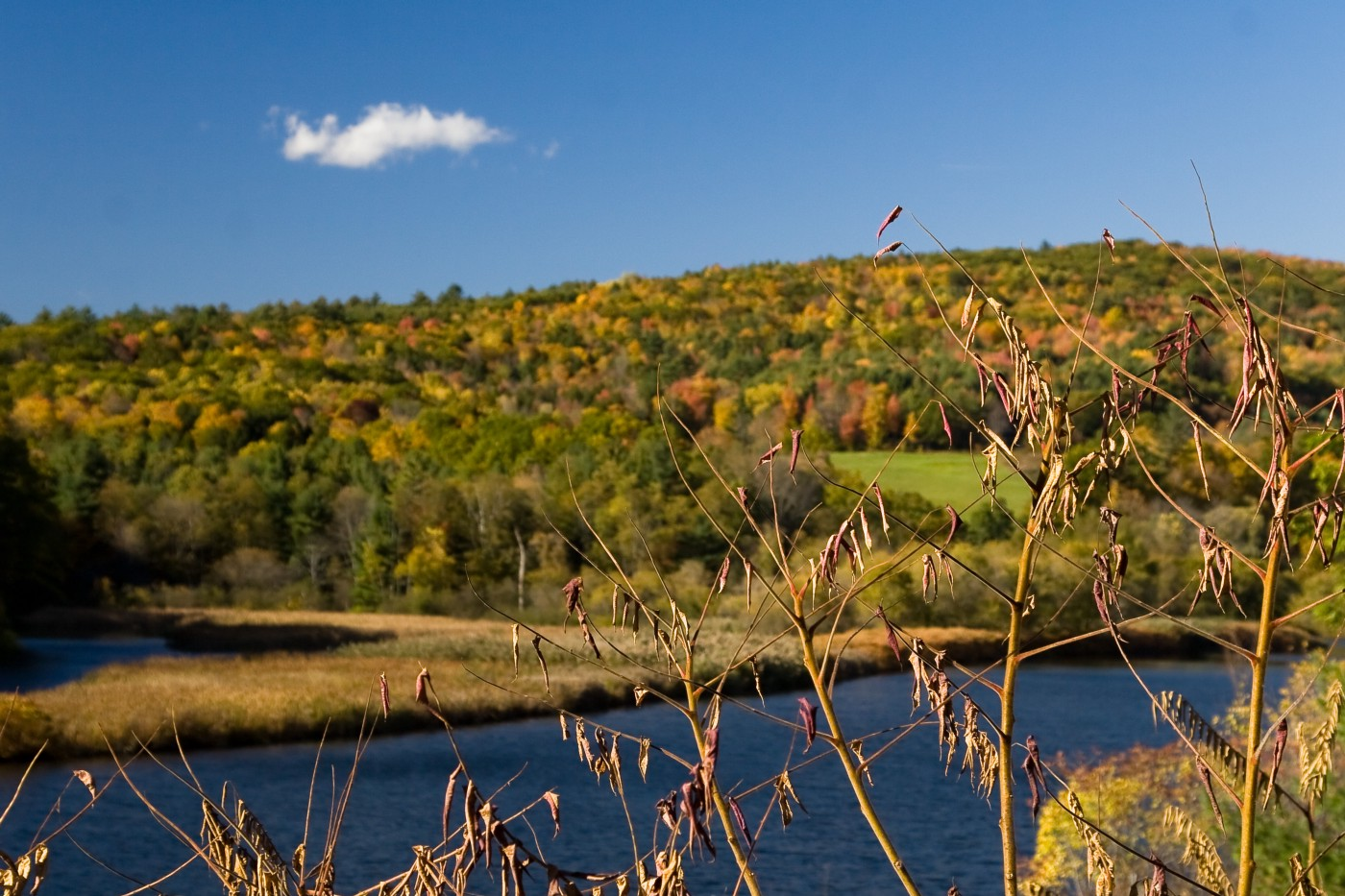A Vermont landscape filled with trees and a lake.